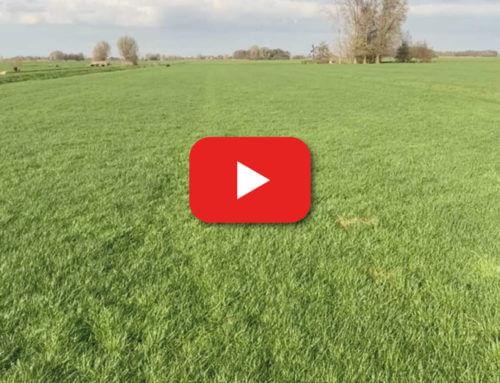 Het laatste gras; eraf of niet?